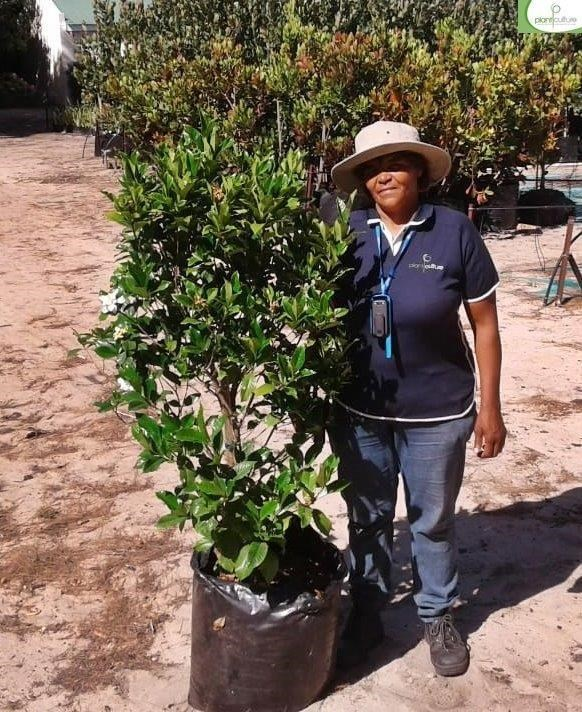 Over 300 000 Trees, Shrubs and Perennials. Waterwise, drought-resistant plants for Cape climate